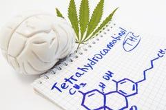 tetrahydrocannabinol THC的作用和行动对人脑 脑子解剖模型是大麻和笔记薄inscri近的叶子  图库摄影