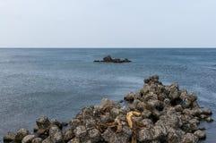Tetrapods Fotos de Stock