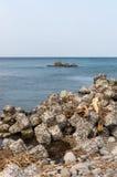 Tetrapods Stock Photo