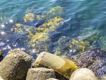 Tetrapods at the Port of Primorsko, Bulgarian Black Sea coastline. Tetrapods on the coastline and in the water and sun glitter on the water surface at the royalty free stock image