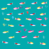 Tetras fish Illustration Stock Photos