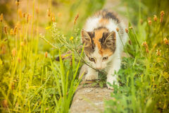Tetris the Cat. Cute little cat exploring and playing Royalty Free Stock Image