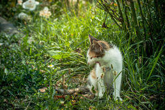Tetris the Cat. Cute little cat exploring and playing Royalty Free Stock Photography