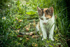 Tetris the Cat. Cute little cat exploring and playing Royalty Free Stock Images