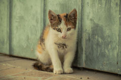 Tetris the Cat. Cute little cat exploring and playing Royalty Free Stock Photos
