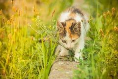 Tetris el gato Imagen de archivo libre de regalías