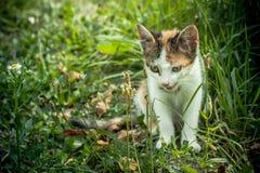 Tetris el gato Imágenes de archivo libres de regalías