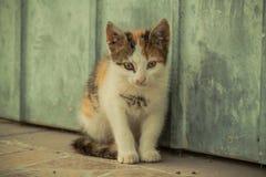 Tetris el gato Fotos de archivo libres de regalías