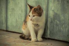Tetris le chat Photos libres de droits