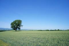 Tetsugaku no ki. (Philosophical Tree Royalty Free Stock Photo