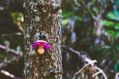 Tettarella che appende su un albero fotografie stock libere da diritti