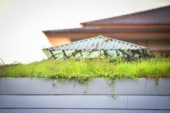 Tetto dell'erba della pianta Fotografia Stock Libera da Diritti