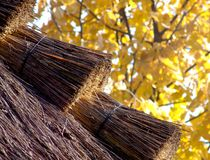Tetto della paglia in autunno Immagine Stock Libera da Diritti