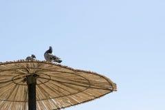 Tetto della paglia dell'ombrello di sole contro il cielo blu immagine stock