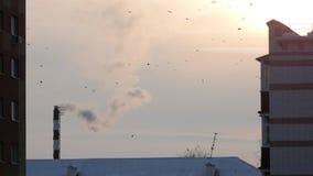 Tetto delle case viventi - stormo degli uccelli della città sopra il fumo di tramonto all'inverno archivi video