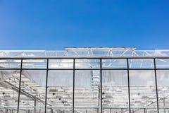 Tetto di vetro della serra con le finestre aperte per ventilazione Fotografia Stock