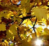 Tetto frondoso nel giallo e nell'immagine luminosi del sole con i raggi di sole fotografia stock libera da diritti