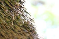 Tetto Thatched Fotografia Stock Libera da Diritti