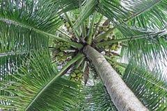 Tettoia del cocco Immagine Stock