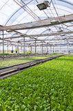 Tettoia della verdura fotografie stock