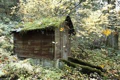 Tettoia di servizio in una conserva della foresta di vecchio sviluppo Immagine Stock Libera da Diritti