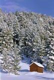 Tettoia e pini dello Snowy Immagine Stock Libera da Diritti