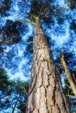 Tettoie con il tronco di albero centrale Immagine Stock