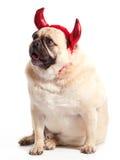 Teufel-Hund Stockbild