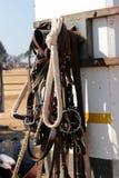 Teugels die op een paarddoos overhandigen Royalty-vrije Stock Foto's