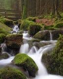 Teutoburg lasowy strumień tęsk ujawnienie obrazy royalty free