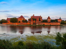 Teutonic Castle in Malbork Royalty Free Stock Images