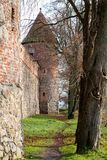 Teutonic castle and red brick tower in the park in the autumn season. A high tower with a sloping red brick roof on a hill. Stock Image