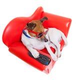 Tevê do cão Fotografia de Stock Royalty Free