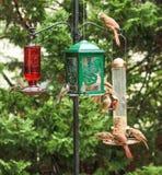 Teveel vogels? Stock Foto's