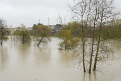 Tevere and trees. The Tevere river during the flood: the trees are submerged under water Stock Photo
