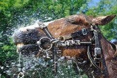 Tevreden gelukkig die paard door water in reeks, 1 wordt gekoeld van 4 royalty-vrije stock fotografie