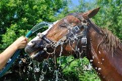 Tevreden gelukkig die paard door water in reeks, 2 wordt gekoeld van 4 stock fotografie