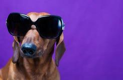 Tevreden hond Royalty-vrije Stock Foto