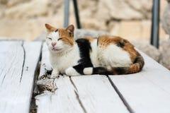 Tevreden kat die op een houten brug rusten Stock Afbeelding