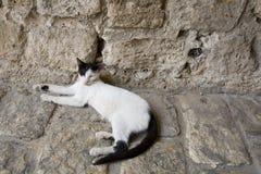 Tevreden kat thuis in Jaffa Israël royalty-vrije stock foto