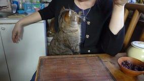 Tevreden snuit van de kat en de hand van de maitresse stock videobeelden