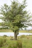 Tewet Tarn Lake, Keswick; Lake District Royalty Free Stock Photography