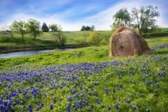 Texas-Ackerland mit einem Heu Ballen und Bluebonnets Lizenzfreie Stockbilder