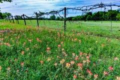 Texas Barbed Wire Fence en een Gebied van Wildflowers Royalty-vrije Stock Afbeelding
