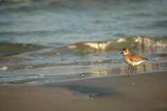 Texas Birds sul fotografia de stock royalty free
