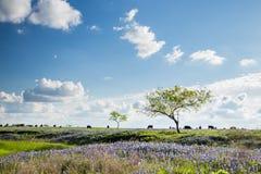 Texas Bluebonnet archivierte und Ackerland in Ennis lizenzfreies stockfoto