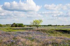 Texas Bluebonnet archivierte und blauer Himmel in Ennis Lizenzfreie Stockfotos