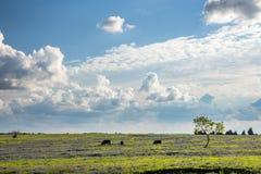 Texas Bluebonnet a classé et des terres cultivables images libres de droits