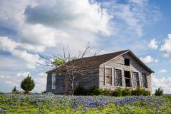 Texas bluebonnet field and abandon barn in Ennis, Texas Stock Photos