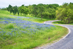 Texas bluebonnet field along curvy country road. Bluebonnet flower field along curvy country road in Texas spring Stock Photo